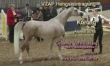 Hengst-Eintragung VZAP 2019 - Gesamte Veranstaltung